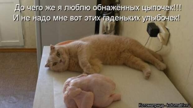 Весёлая котоматрица