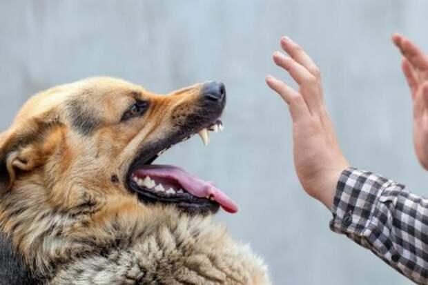 Ученые научили собак диагностировать коронавирус по запаху подмышек человека