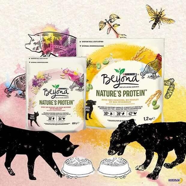 Nestlé накормит котов и собак личинками