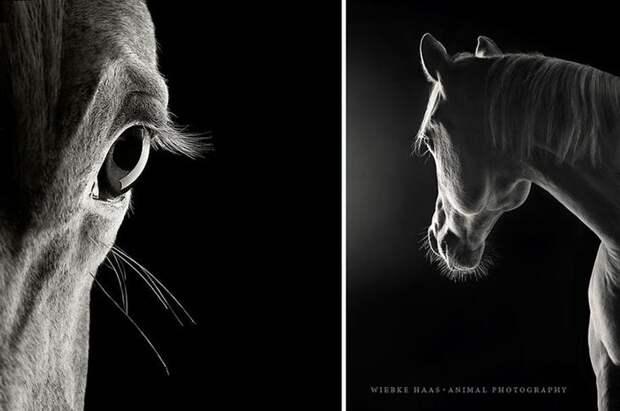 Юма животные, искусство, лошади, фотография