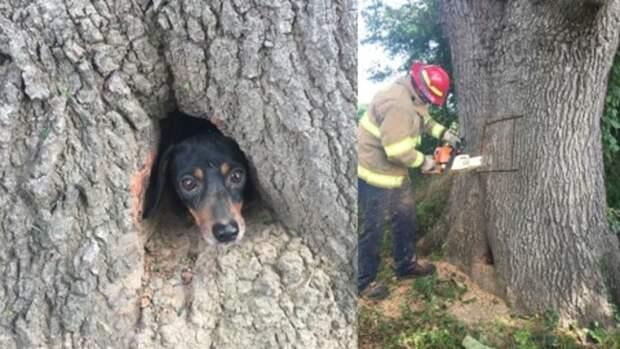 Собаки могут залезть и застрять где-угодно, но этот щенок всех превзошел!