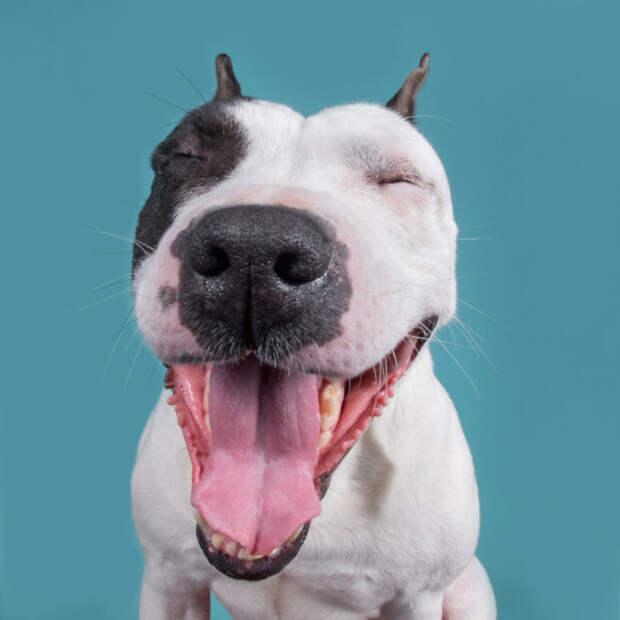 Все эмоции на морде: проект про собак, единственных и неповторимых