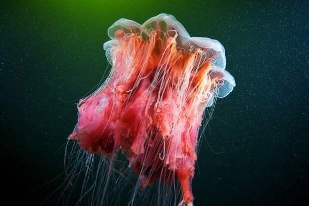 Живность белого моря (28 фото)