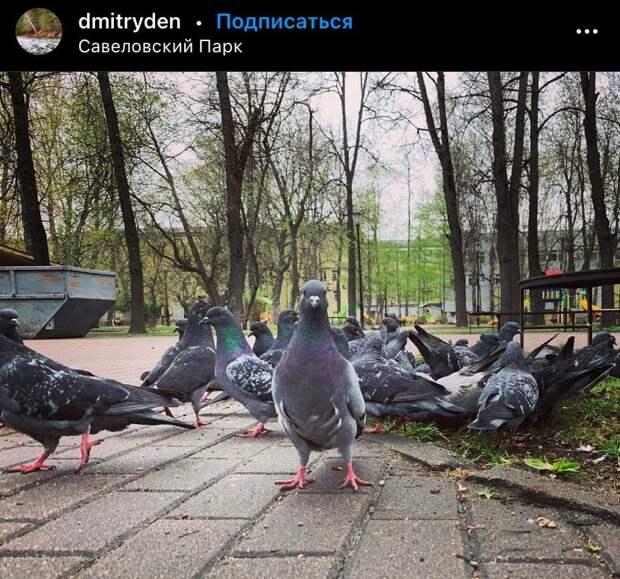 Фото дня: голуби в Савеловском парке