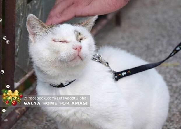 """""""Галя, всё наладится!"""" Все думали, что она безнадёжно слепая, но кошечка решила сделать всем сюрприз!"""