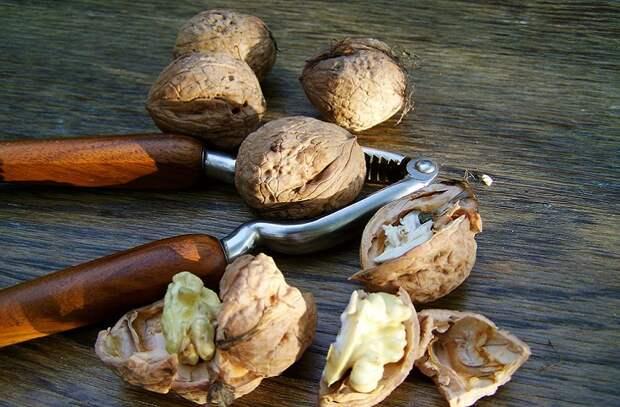 Самые целебные и вредные орехи для здоровья
