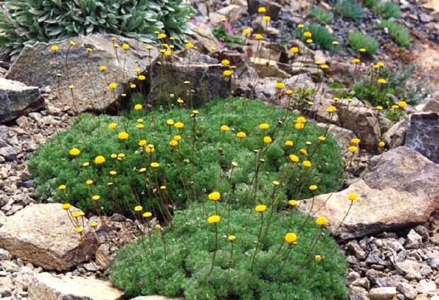 Почвопокровные растения: выбираем лучшие из лучших!
