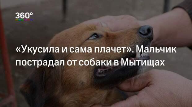 «Укусила и сама плачет». Мальчик пострадал от собаки в Мытищах