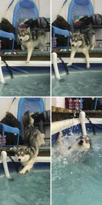 Несколько смешных фото собак, у которых случился неудачный день