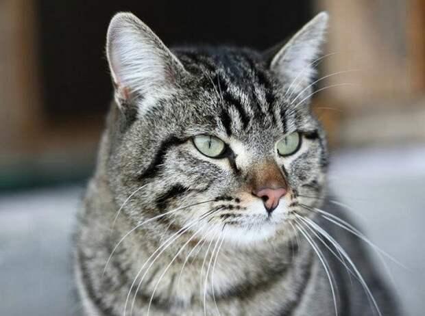 О том как кот Винни спас свою семью