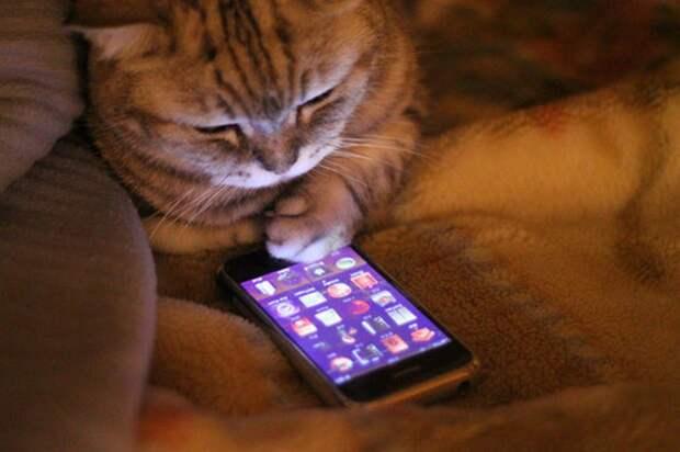 10 малоизвестных кодов для смартфона, которые выручат тебя в любой ситуации