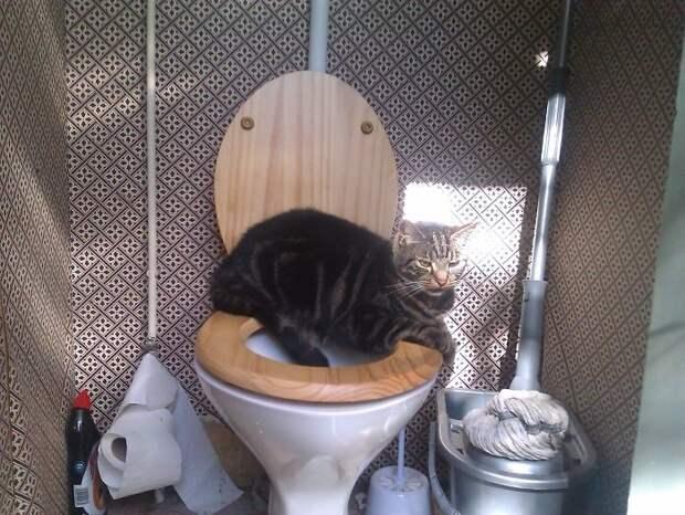 Иногда они выбирают самые неожиданные места для отдыха животные, коты, кошки, неожиданно, привычки, странности, фото, юмор