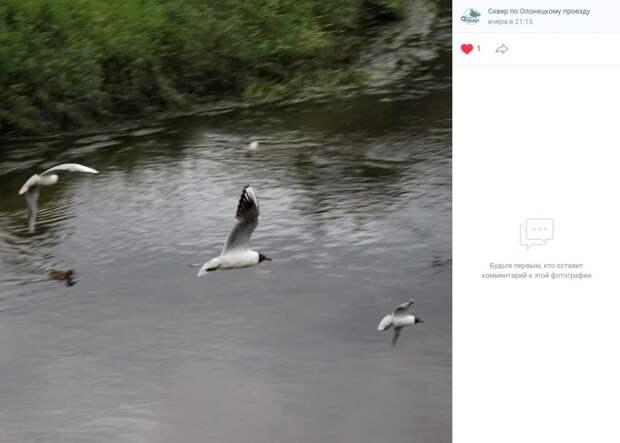 Фото дня: чайки над Олонецким проездом