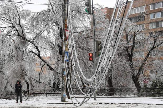 Во Владивостоке циклон повалил 4,5 тысячи деревьев и веток