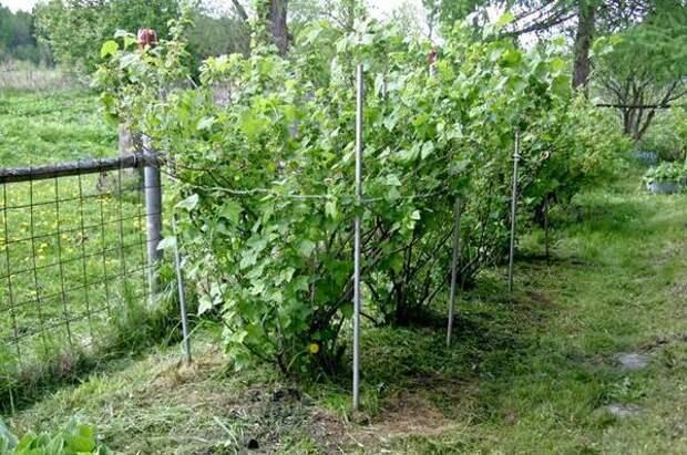 Без права на ошибку. Как подготовить место под плодовый сад?