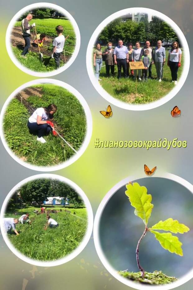 Высаженные на территории детского сада в Лианозове дубки прижились и уже покрылись листвой