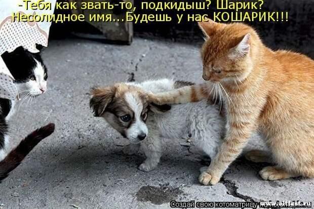 1269010896_kotomatrix_06 (700x467, 95Kb)