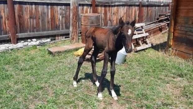 Умерла лошадь, которую спасли из-подо льда на Катуни