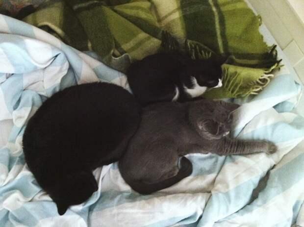 Евонька — кошка, на которой держится дом. Рассказ о последнем выжившем котёнке