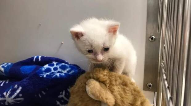 Котенок был настолько слаб, что и стоять не мог. Умная собака взяла малыша под свою опеку