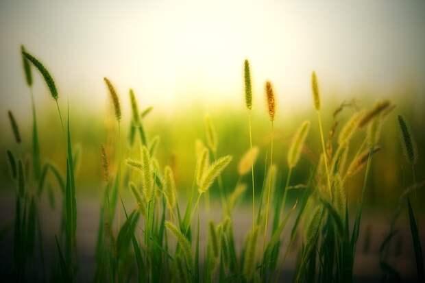 Трава. Фото: pixabay.com