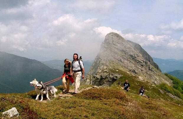 Почему в России набирает обороты новый вид туризма — с собаками
