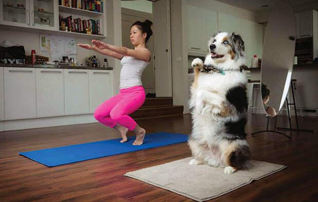 Да, хозяйка, с равновесием у тебя не очень... животные, йога, милота, прикол, фото