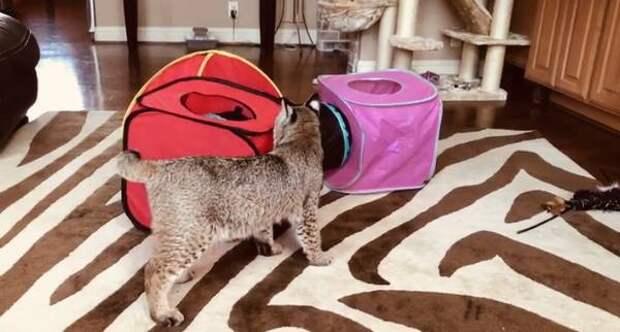 Домохозяйка приютила странную кошку «пухлую злюку и без хвоста», а наутро узнала правду