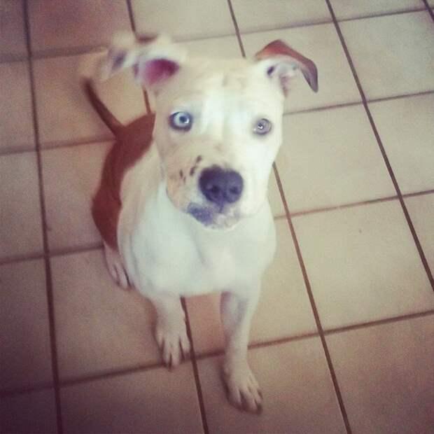 Истощенную и раненую собаку выбросили у дверей клиники. Но ей необходимо было выжить!