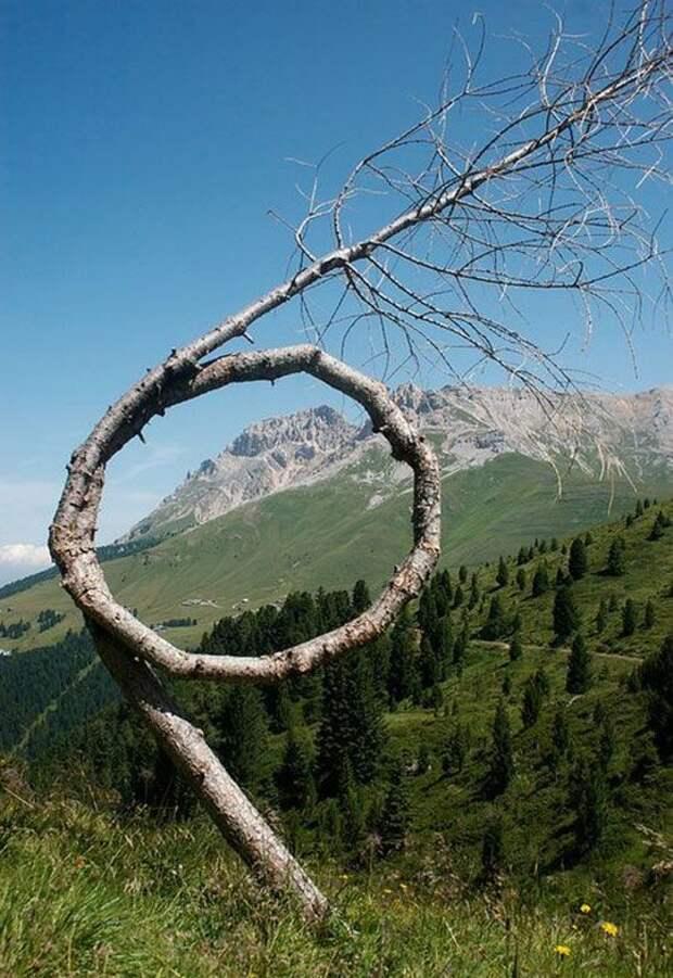 И немного деревьев, которых жизнь закрутила деревья, невероятное, природа, удивительное, флора