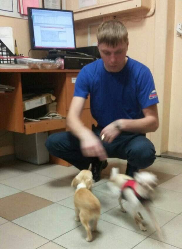 """""""Живите у нас, пока хозяева поправятся!"""" Карельские МЧС-ники приютили трёх собак из машины, попавшей в аварию…"""