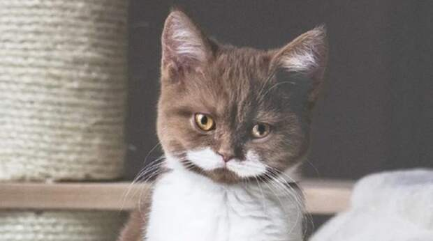 cat with moustache