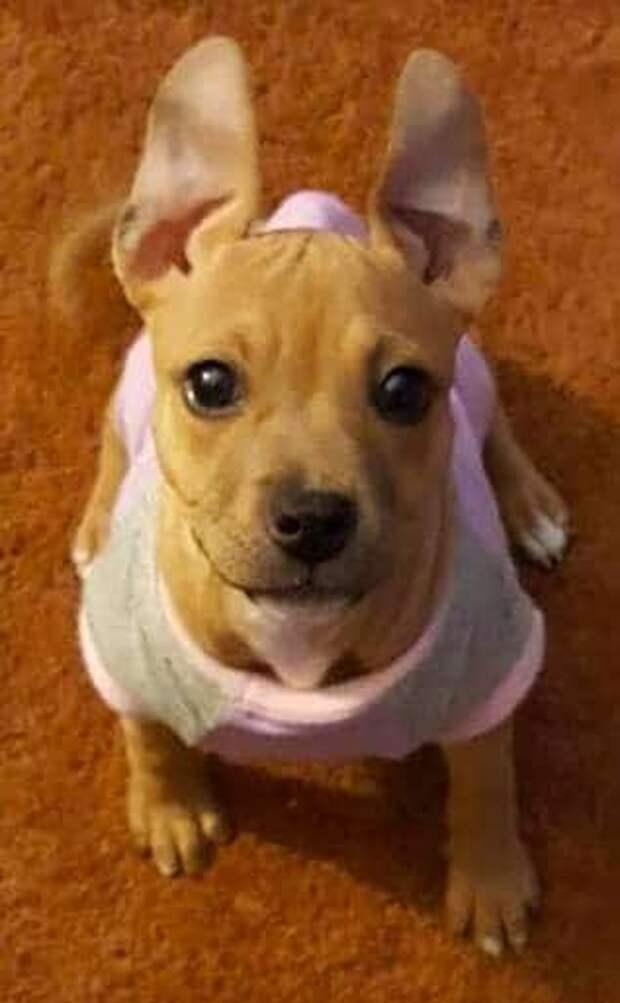 щенок в одежде