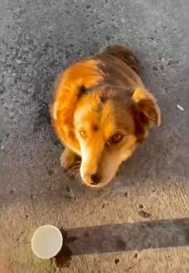 Собака продолжает ходить сюда в поиске поддержки и заботы