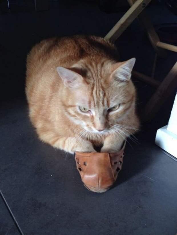 Непостижимая кошачья логика: 30 фото, которые точно вас рассмешат