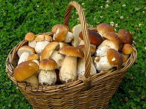 Россия попробует накормить полмира грибами