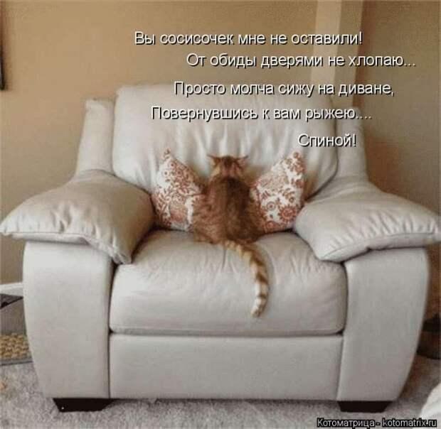 Субботняя котоматрица для всех (23 фото)