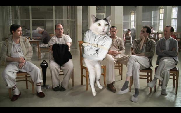 Кошка по кличке Milk-chan стала звездой интернета