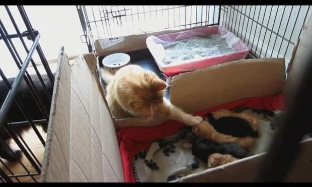 Котята впервые увидели своего старшего брата