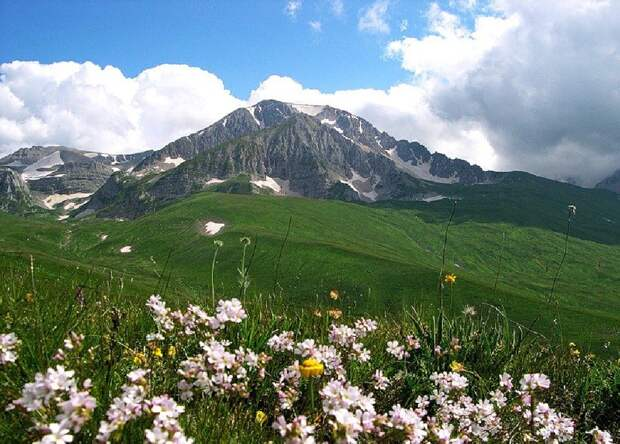 Альпийские луга России