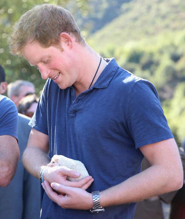 Принц Гарри и ежик-альбинос