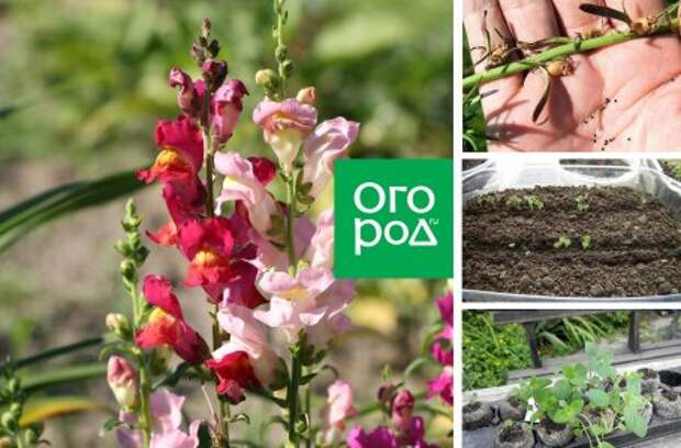 Регламенты посева самых популярных цветочных культур