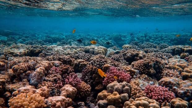 Экологичные похороны: как останки людей и бетон могли бы помочь коралловым рифам