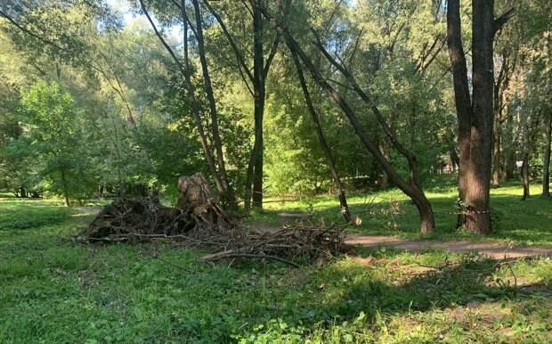 Спиленные ветки в Грачёвском парке уберут уже сегодня — управа