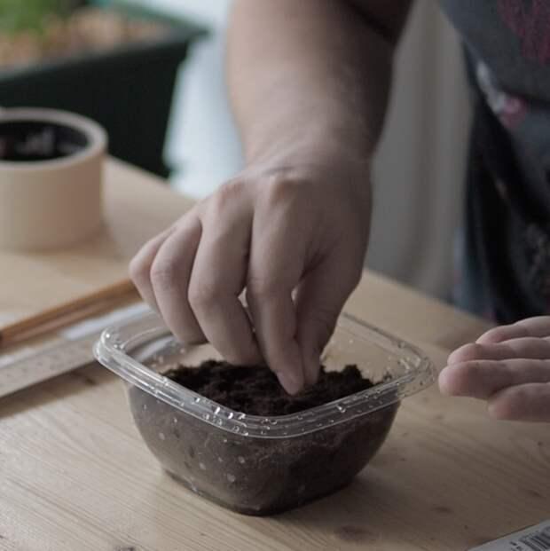 Как вырастить розмарин на подоконнике дома