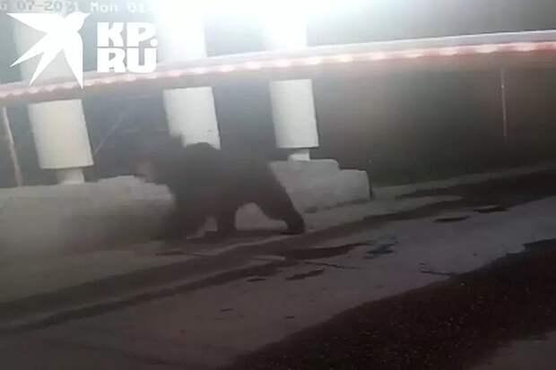 Сбежавшего три дня назад в Мытищах медведя заметили в Пушкинском районе