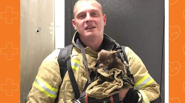 Ижевские пожарные спасли из огня собаку