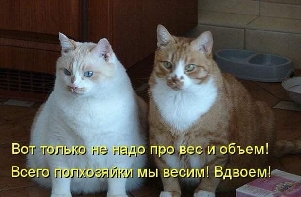 1450431456_kotomatrica-2