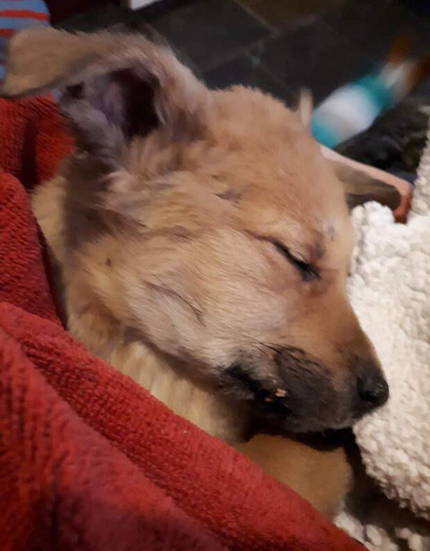 Женщина не знала, сумеют ли замерзшие щенки пережить еще одну ночь