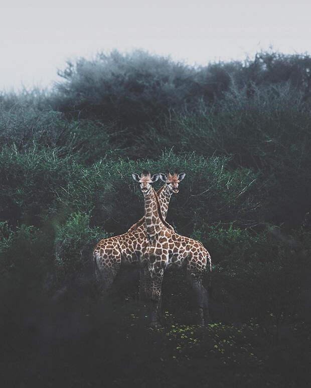 Когда дикая природа вызывает восторг. Фотограф Донал Бойд 61
